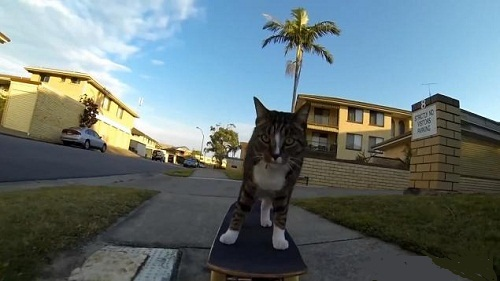 Cat Skateboarding Adventure