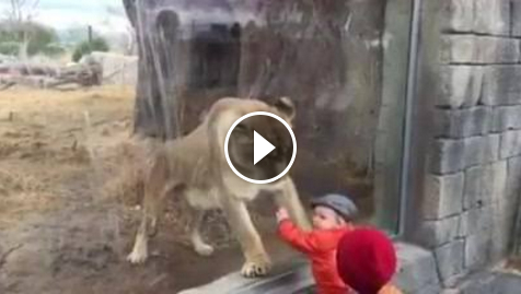 Top 10 Facebook Funny Videos and Accounts - Feeling the Beast