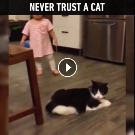 Top 10 Facebook Funny Videos and Accounts - Never Trust a Cat